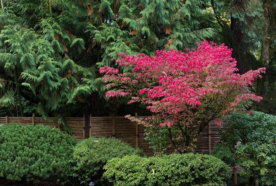 秋天的波特兰日本花园_图1-37
