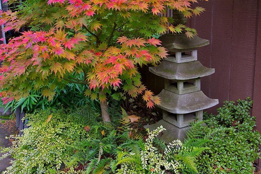 秋天的波特兰日本花园_图1-39