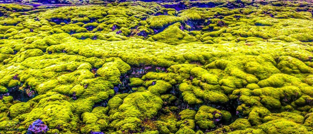 冰岛风采,自然彩图_图1-22