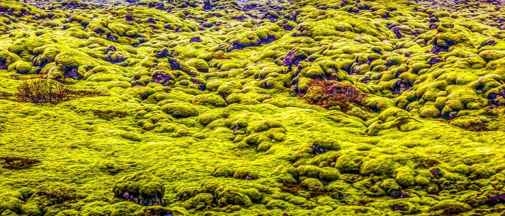 冰岛风采,自然彩图_图1-9