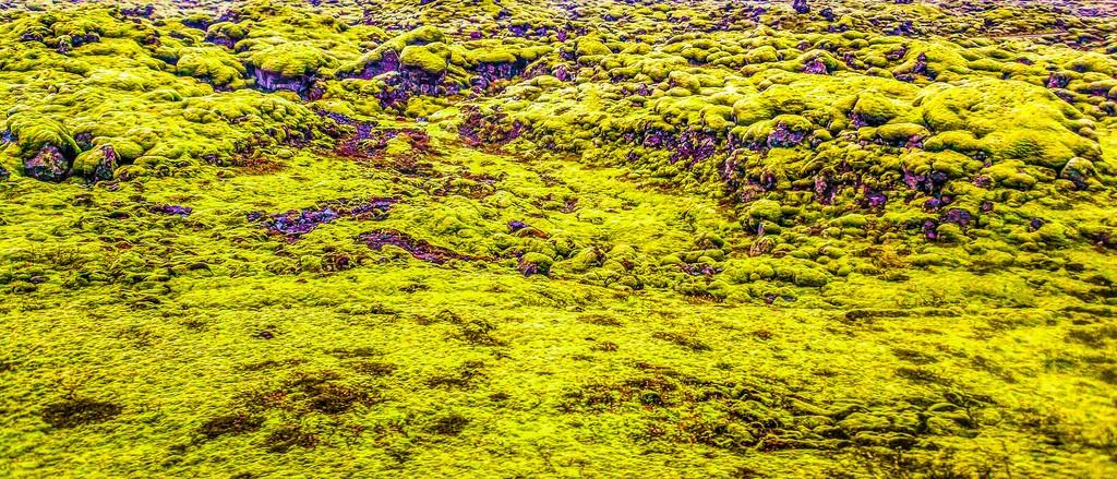 冰岛风采,自然彩图_图1-13