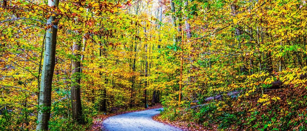 宾州雷德利克里克公园(Ridley creek park),秋景落叶_图1-12