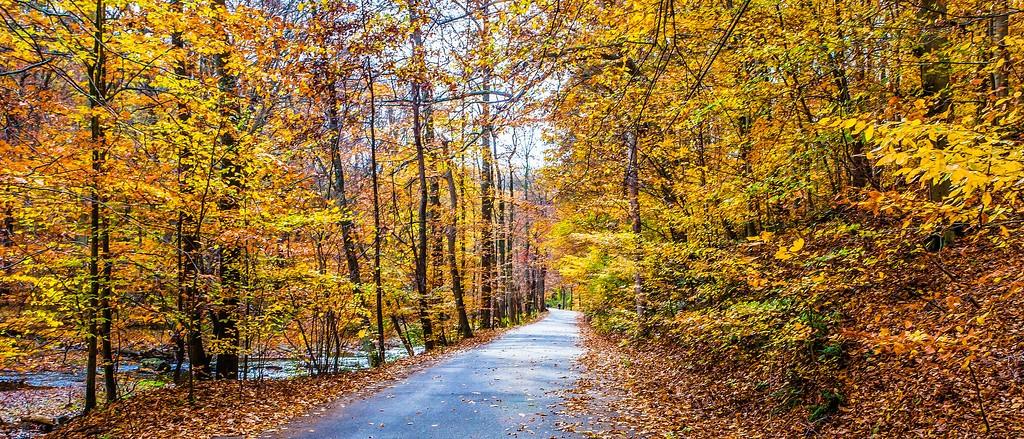 宾州雷德利克里克公园(Ridley creek park),秋景落叶_图1-10