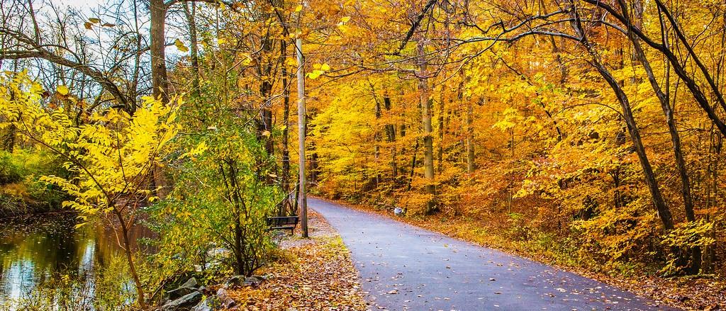 宾州雷德利克里克公园(Ridley creek park),秋景落叶_图1-7