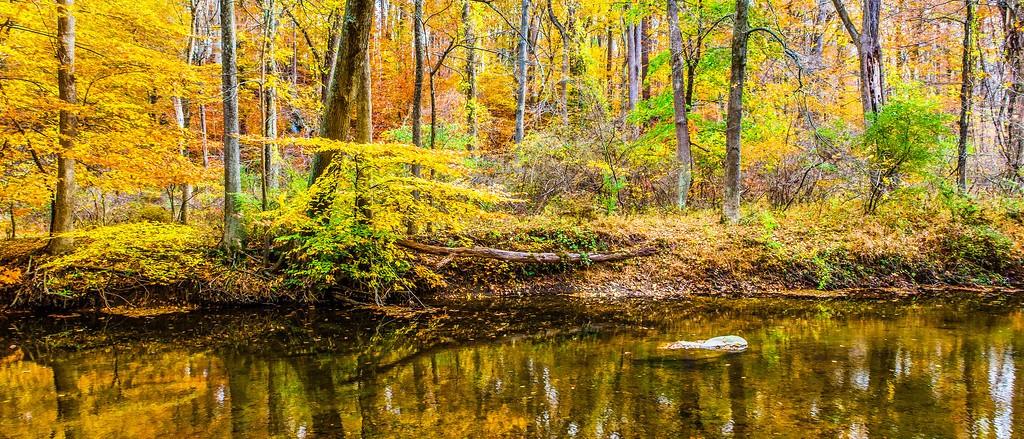 宾州雷德利克里克公园(Ridley creek park),秋景落叶_图1-9