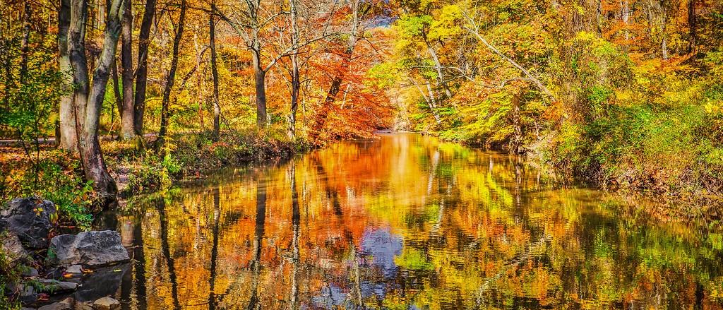 宾州雷德利克里克公园(Ridley creek park),秋景落叶_图1-6