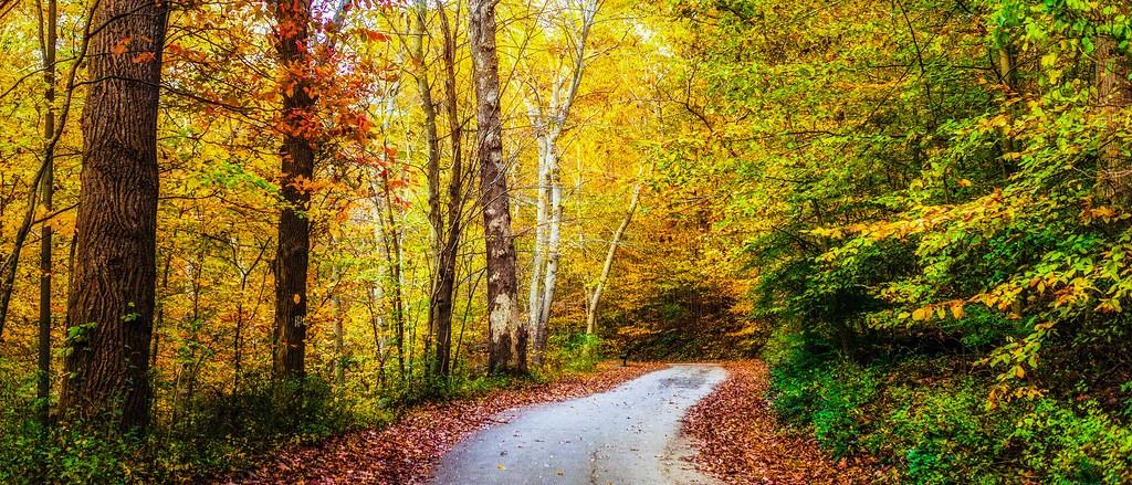 宾州雷德利克里克公园(Ridley creek park),秋景落叶_图1-5