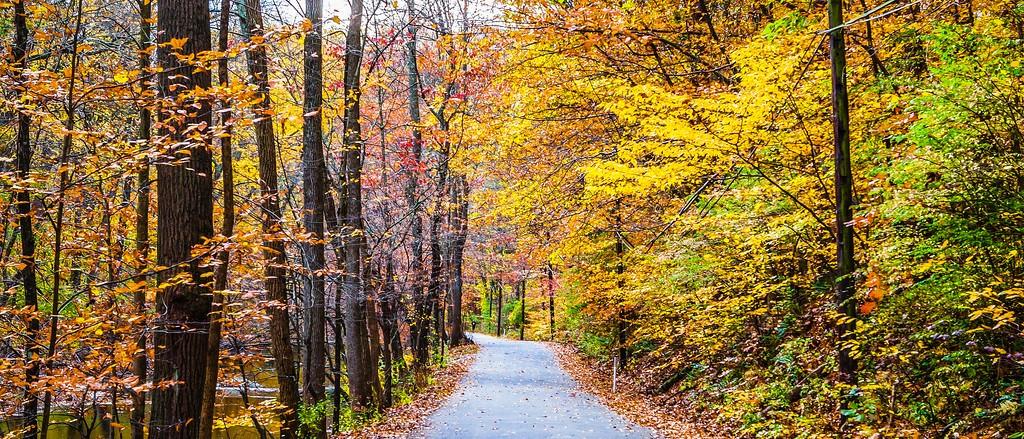 宾州雷德利克里克公园(Ridley creek park),秋景落叶_图1-8