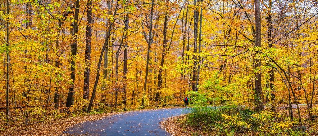 宾州雷德利克里克公园(Ridley creek park),秋景落叶_图1-4