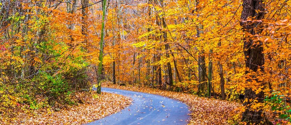 宾州雷德利克里克公园(Ridley creek park),秋景落叶_图1-3