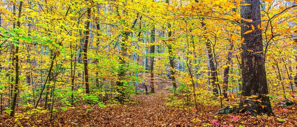 宾州雷德利克里克公园(Ridley creek park),秋景落叶_图1-2
