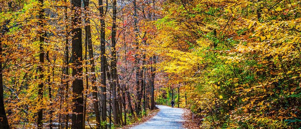 宾州雷德利克里克公园(Ridley creek park),秋景落叶_图1-1