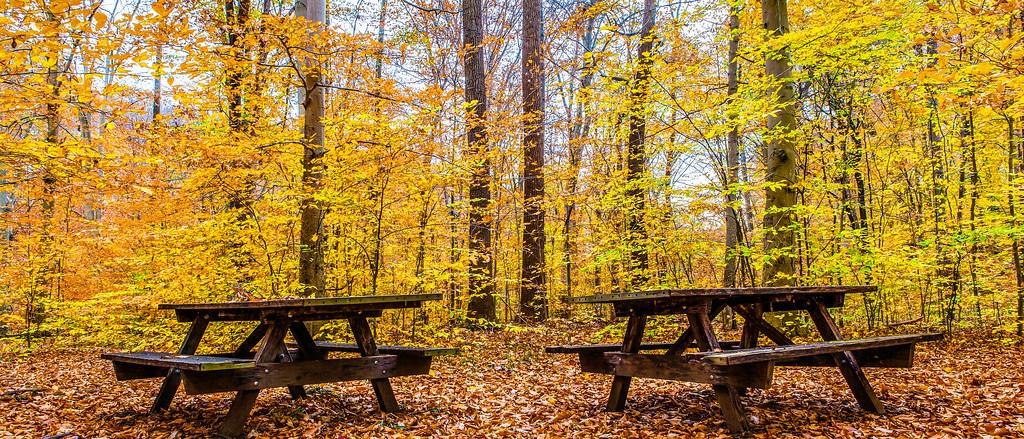 宾州雷德利克里克公园(Ridley creek park),秋景落叶_图1-16