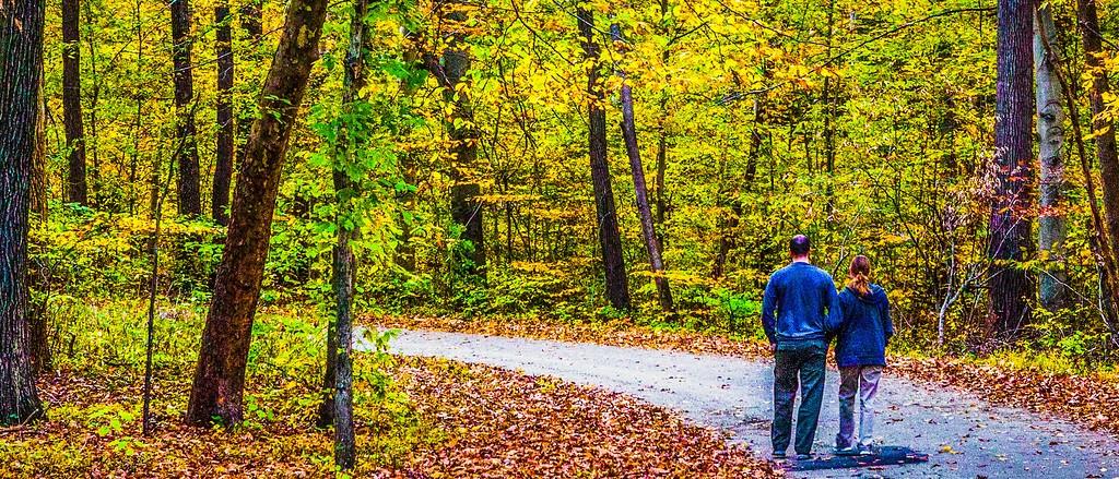 宾州雷德利克里克公园(Ridley creek park),秋景落叶_图1-15