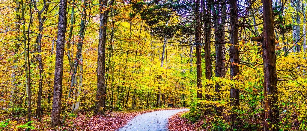 宾州雷德利克里克公园(Ridley creek park),秋景落叶_图1-14