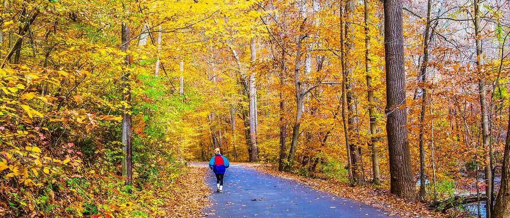 宾州雷德利克里克公园(Ridley creek park),秋景落叶_图1-17