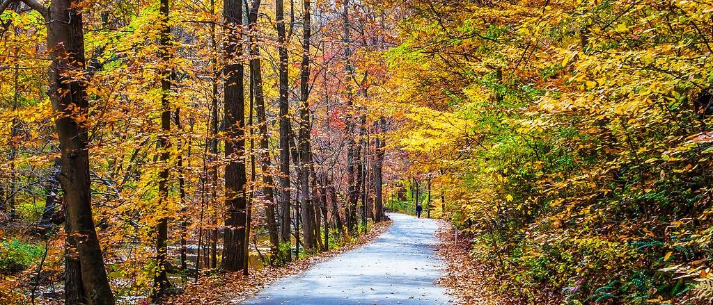 宾州雷德利克里克公园(Ridley creek park),秋景落叶_图1-19