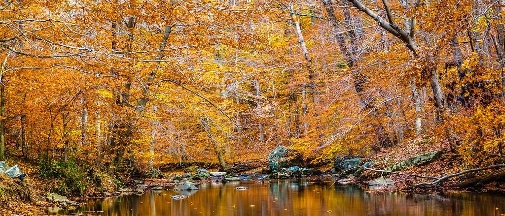 宾州雷德利克里克公园(Ridley creek park),秋景落叶_图1-20