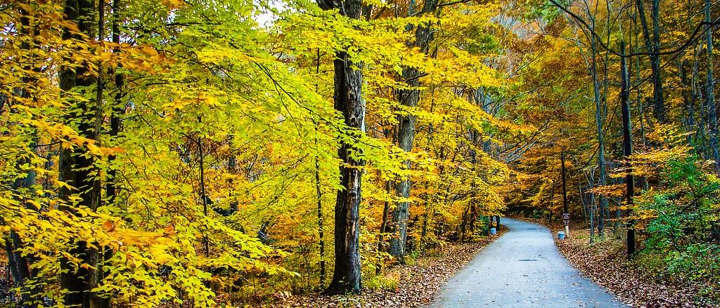 宾州雷德利克里克公园(Ridley creek park),秋景落叶_图1-18