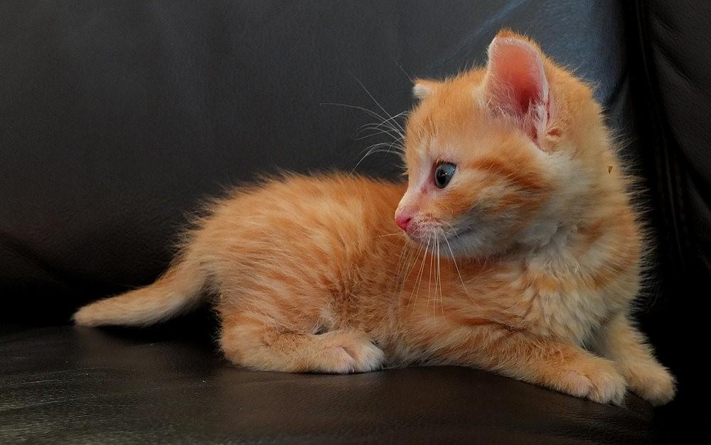 苏珊娜的猫宝宝_图1-1
