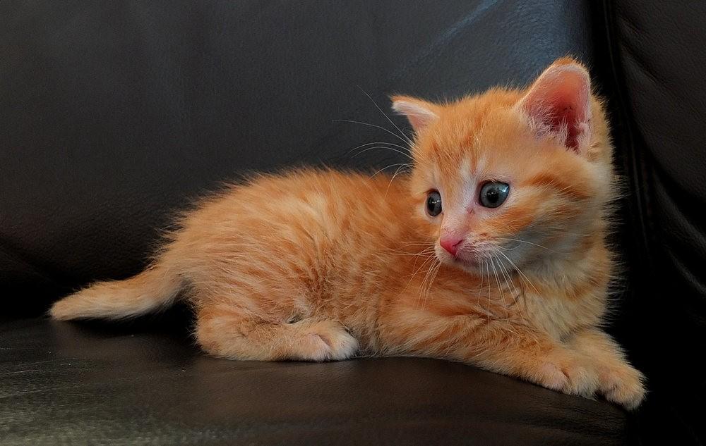 苏珊娜的猫宝宝_图1-4