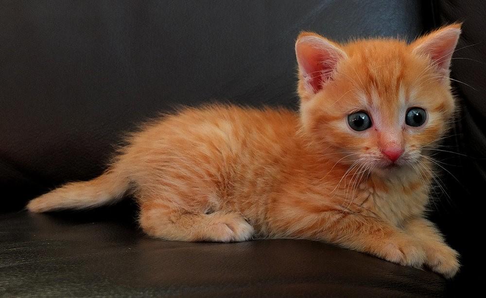 苏珊娜的猫宝宝_图1-5