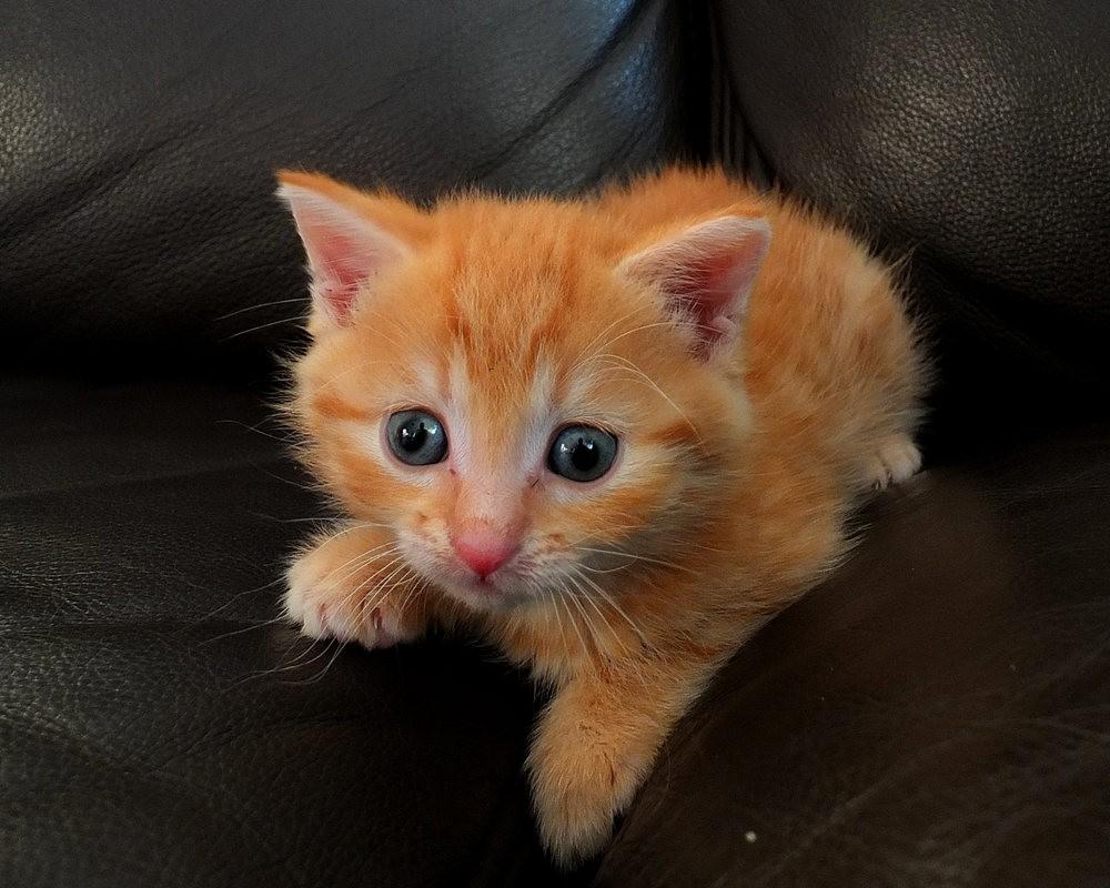 苏珊娜的猫宝宝_图1-6