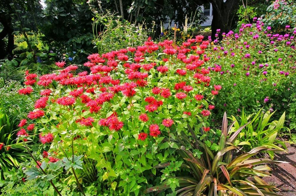 乔伊克里克苗圃花园在8月_图1-2