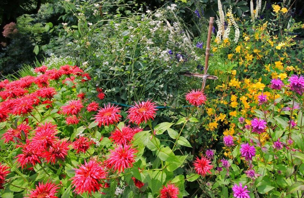 乔伊克里克苗圃花园在8月_图1-3