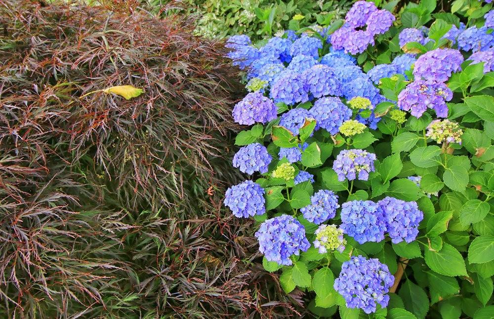 乔伊克里克苗圃花园在8月_图1-5
