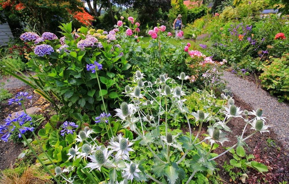 乔伊克里克苗圃花园在8月_图1-8
