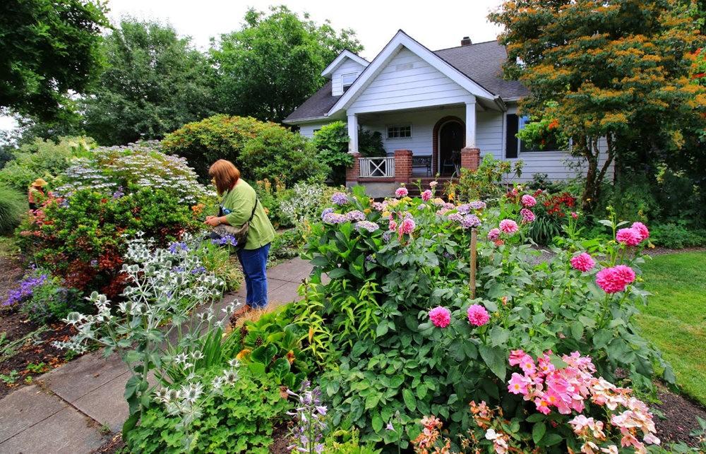 乔伊克里克苗圃花园在8月_图1-9