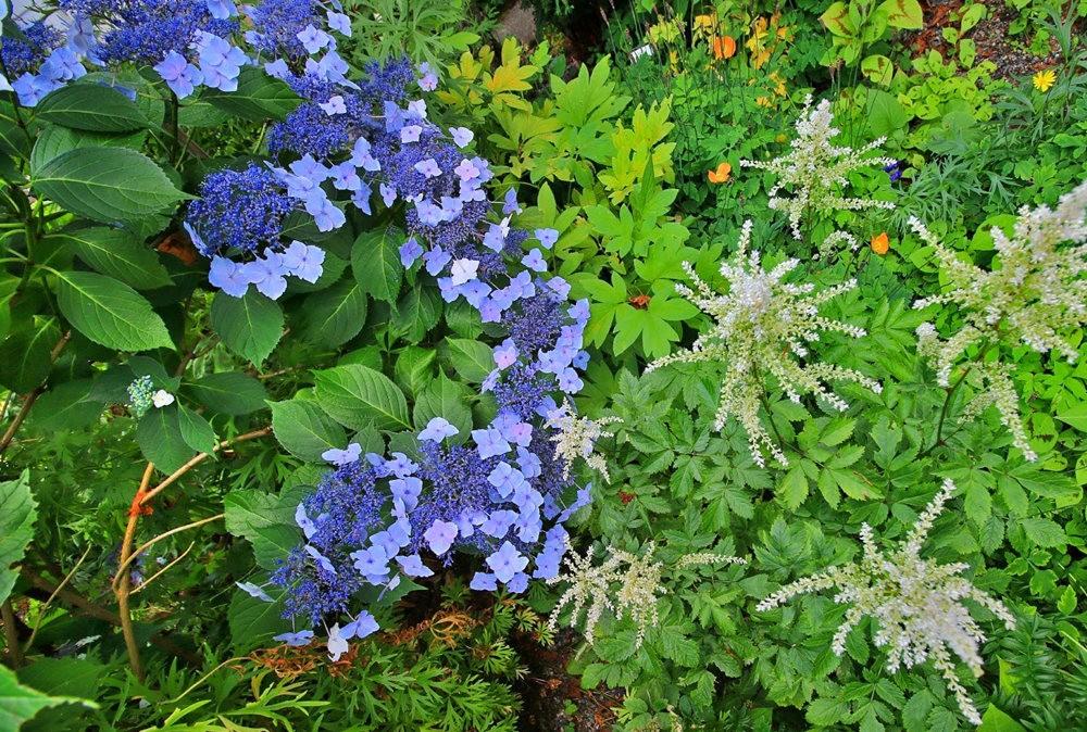 乔伊克里克苗圃花园在8月_图1-12