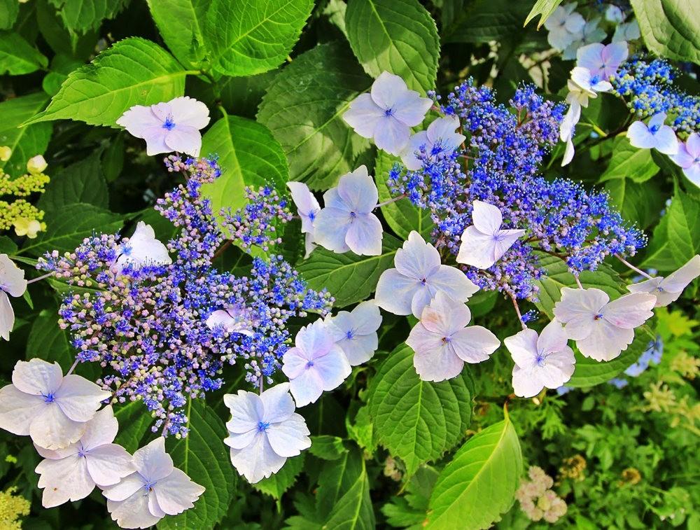 乔伊克里克苗圃花园在8月_图1-13