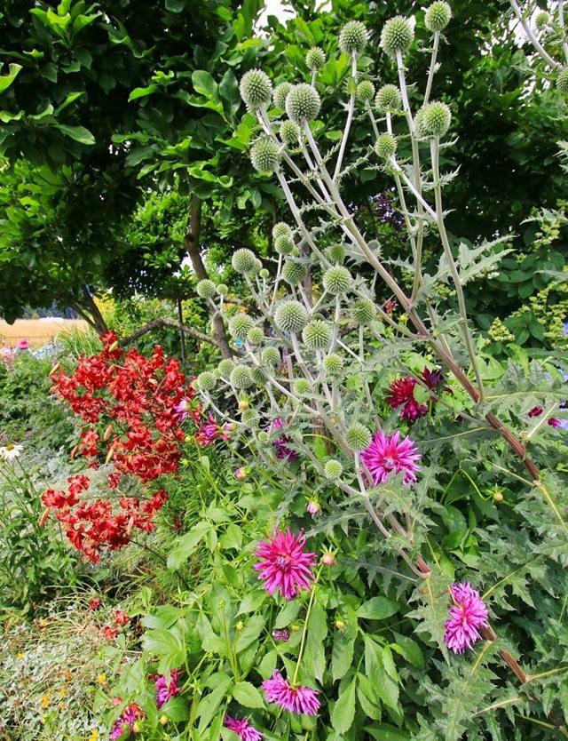 乔伊克里克苗圃花园在8月_图1-18