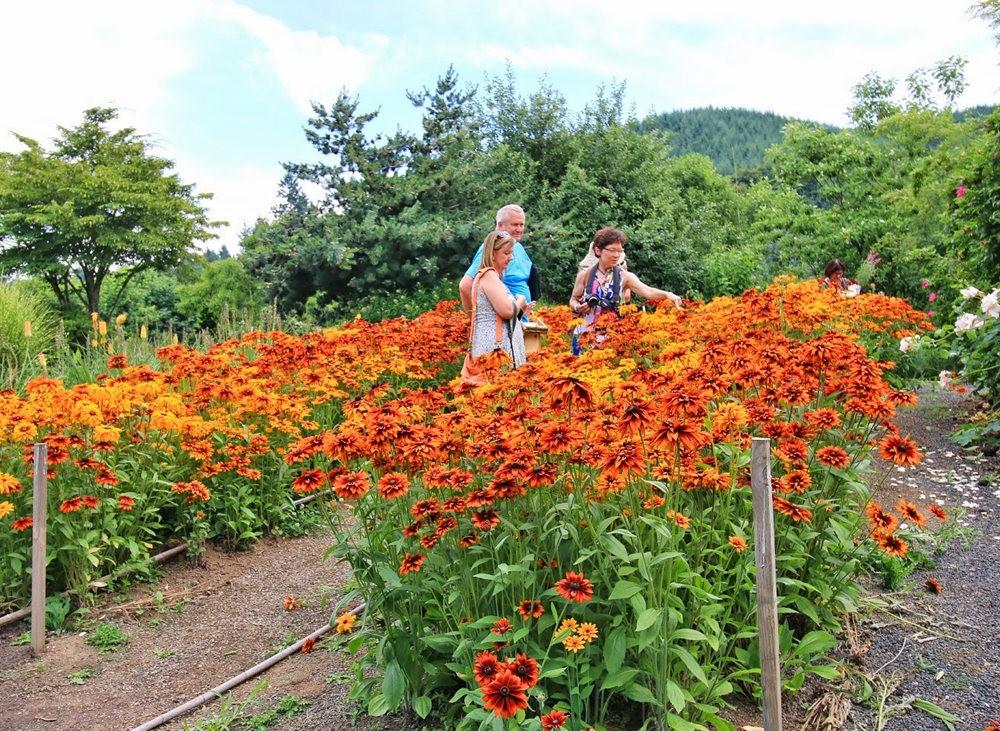 乔伊克里克苗圃花园在8月_图1-22