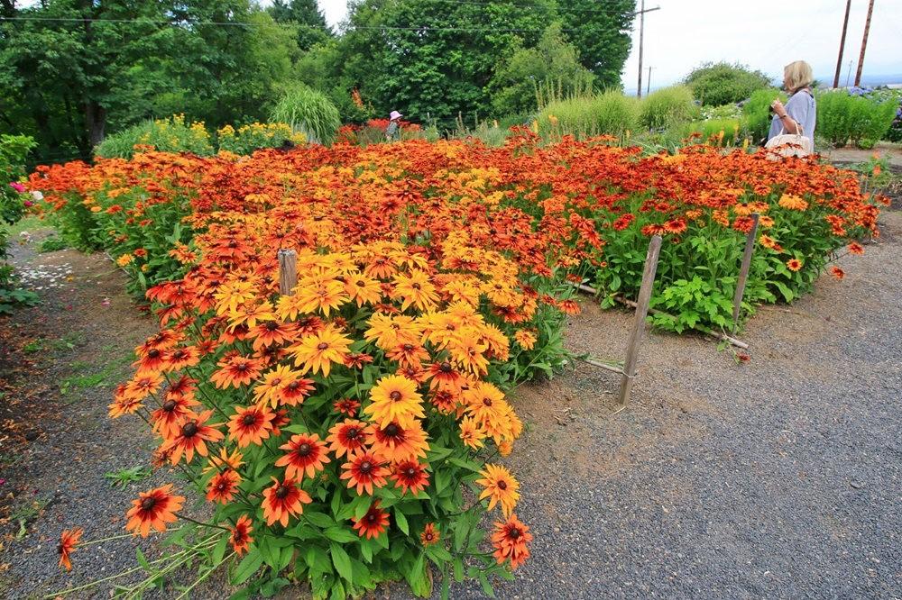 乔伊克里克苗圃花园在8月_图1-23