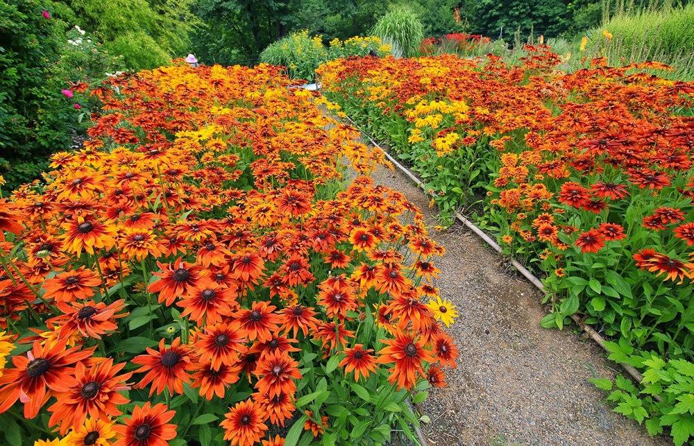 乔伊克里克苗圃花园在8月_图1-24