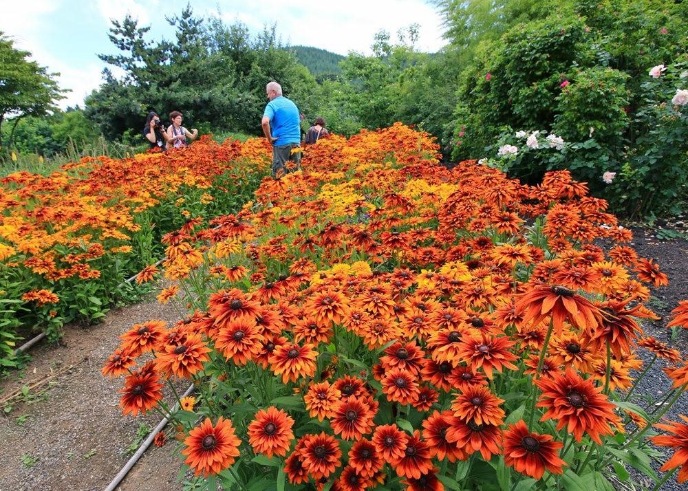 乔伊克里克苗圃花园在8月_图1-25