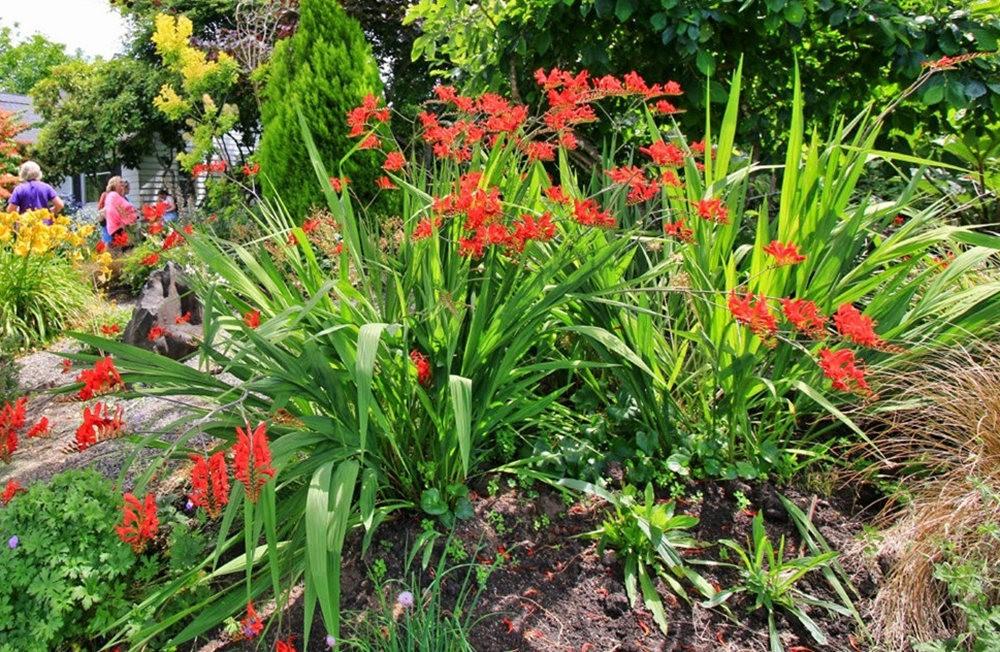 乔伊克里克苗圃花园在8月_图1-16