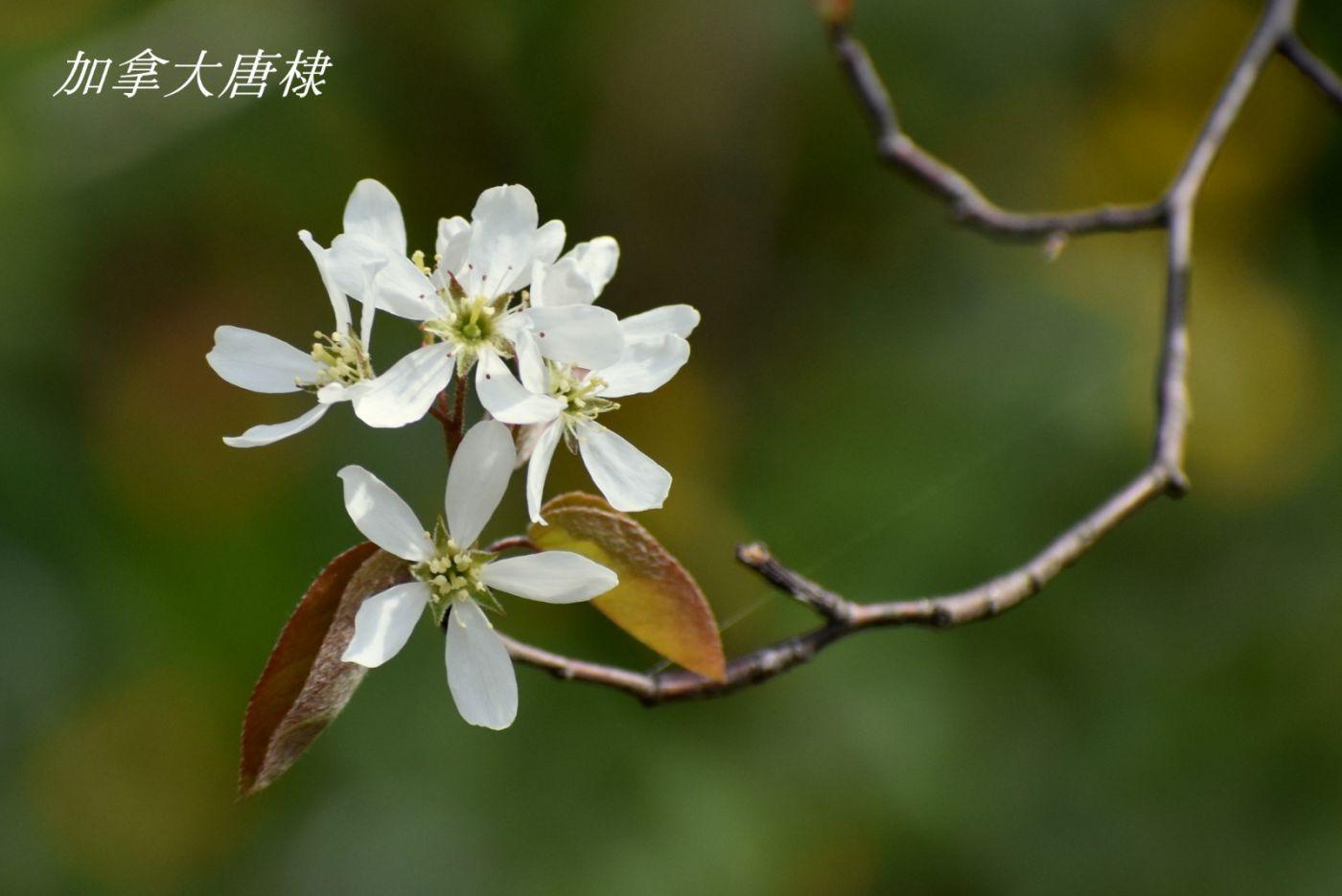 花草图谱 (14)_图1-5