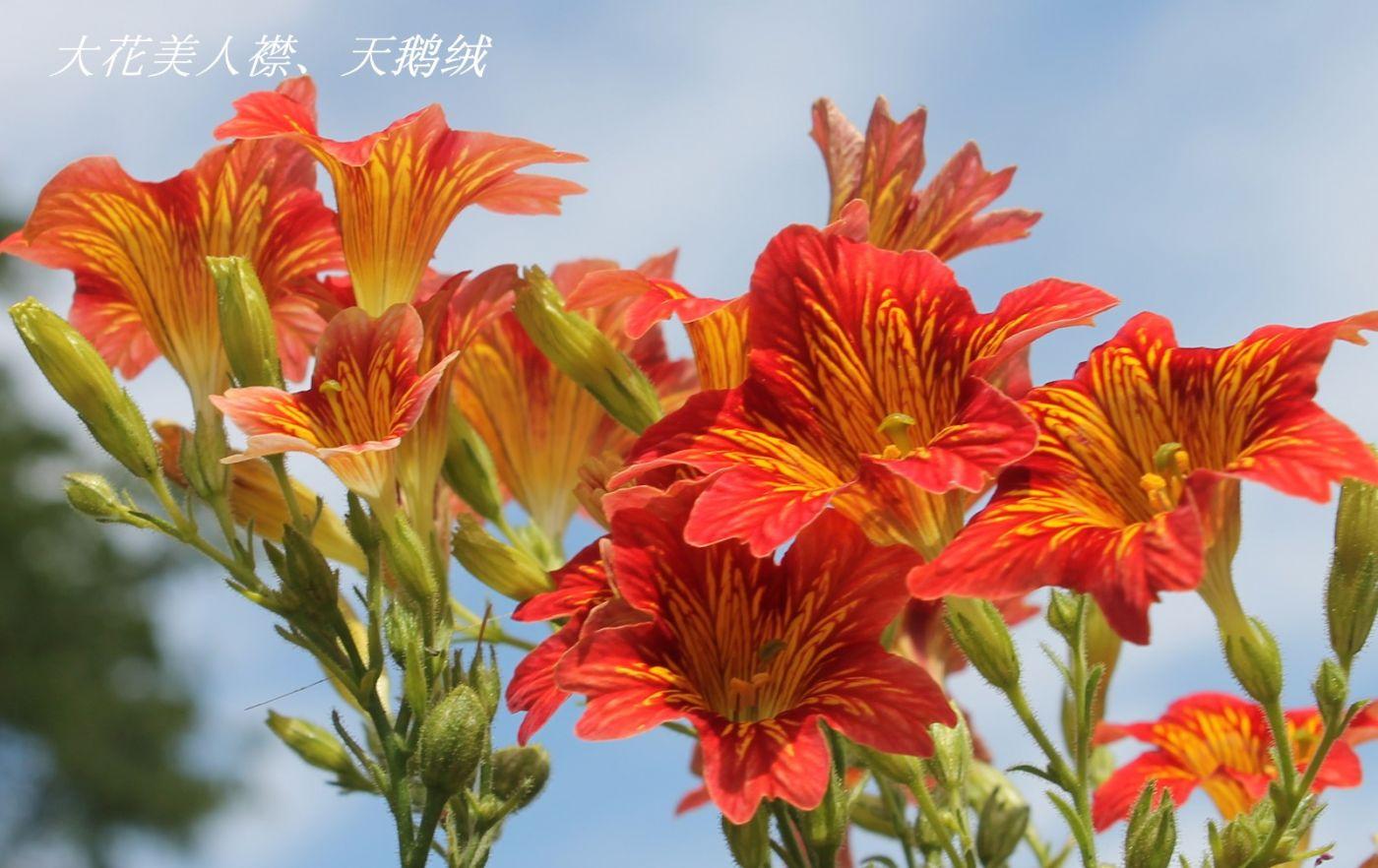 花草图谱 (14)_图1-16