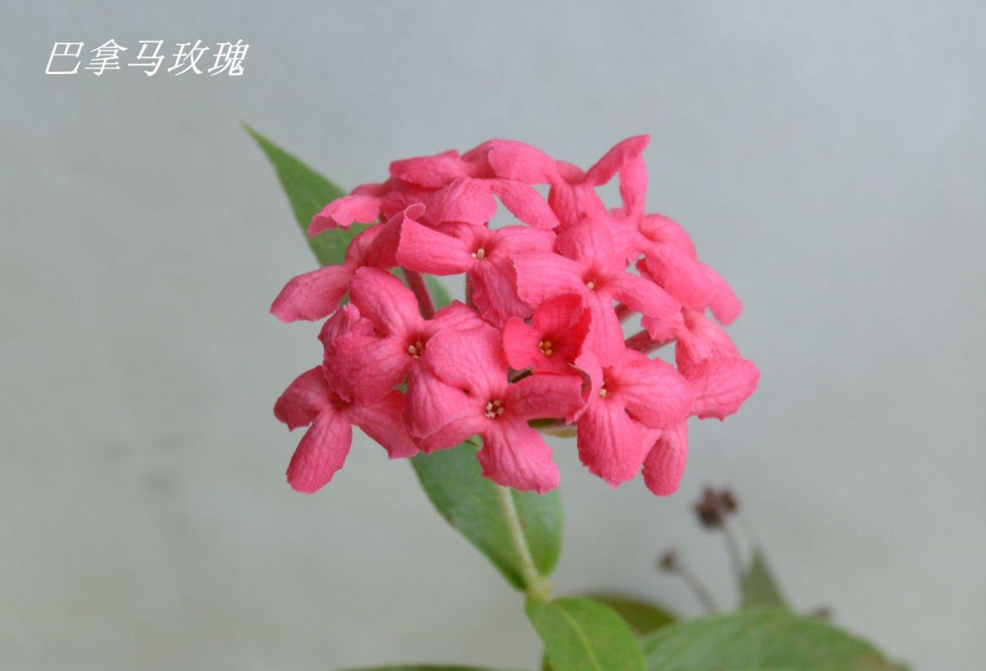 花草图谱 (14)_图1-24