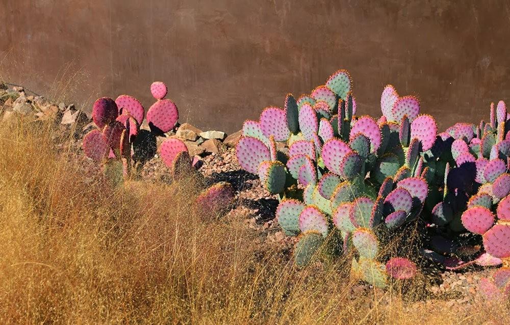 沙漠植物园其它部分_图1-3