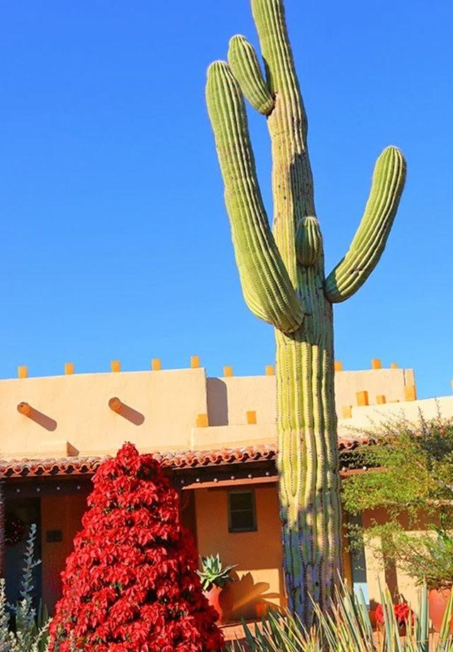 沙漠植物园其它部分_图1-10