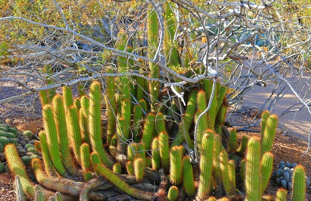 沙漠植物园其它部分_图1-13