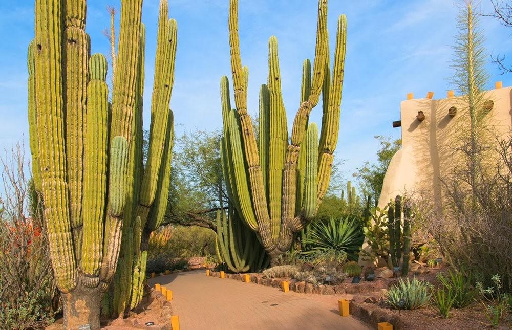 沙漠植物园其它部分_图1-14