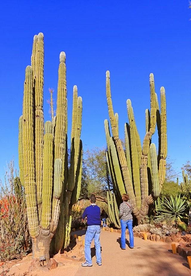 沙漠植物园其它部分_图1-15
