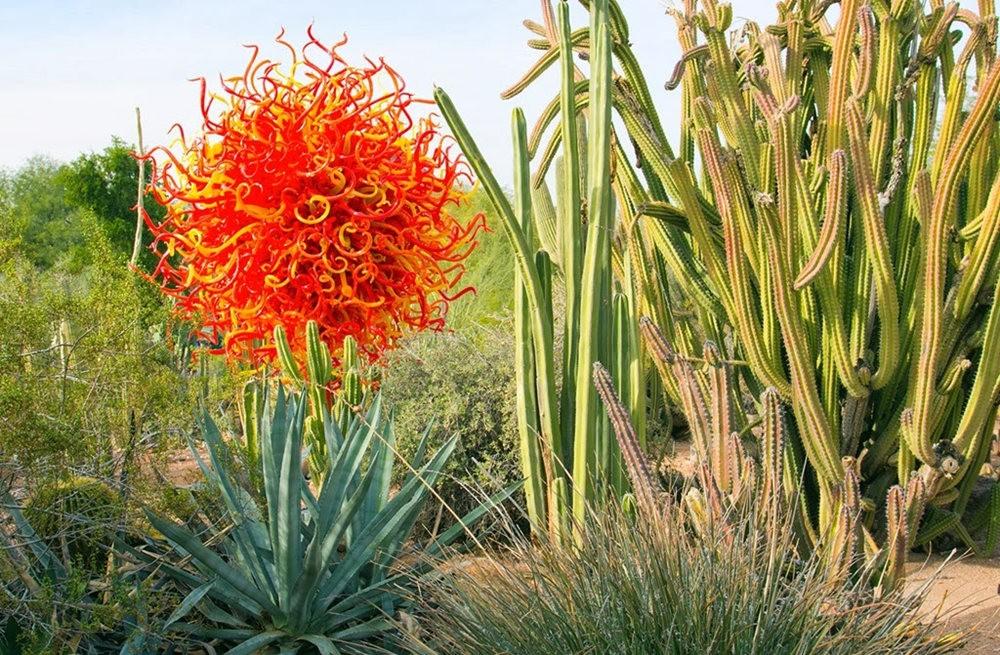 沙漠植物园其它部分_图1-16