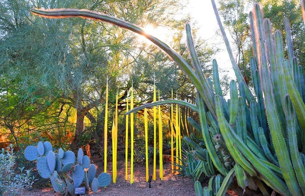 沙漠植物园其它部分_图1-17